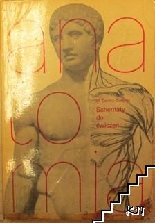 Schematy do ćwiczeń z anatomii człowieka