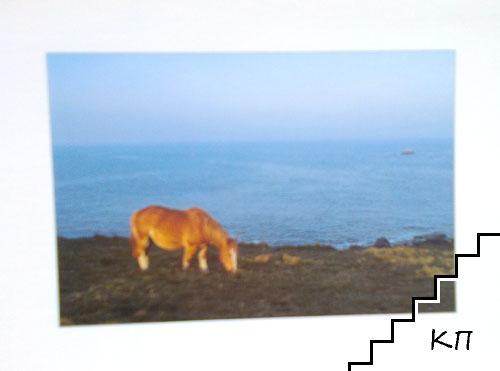 Кон на брега. Френска картичка