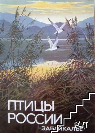 Птицы России. Комплект 16 открыток
