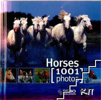 Horses 1001 Photos