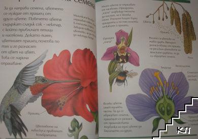 Голяма детска енциклопедия (Допълнителна снимка 2)