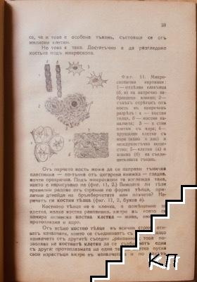 От амебата до човека (Допълнителна снимка 1)