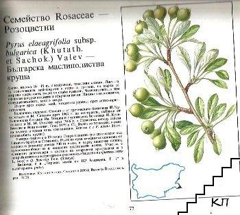 Атлас на ендемичните растения в България (Допълнителна снимка 2)