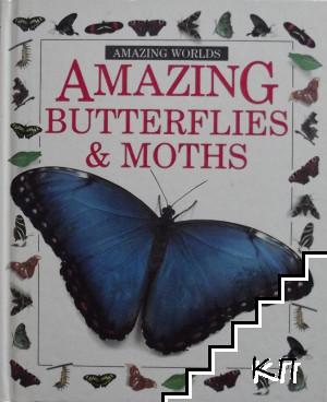 Amazing Butterflies & Moths