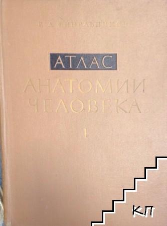 Атлас анатомии человека в трех томах. Том 1: Учение о костях, суставах, связках и мышцах