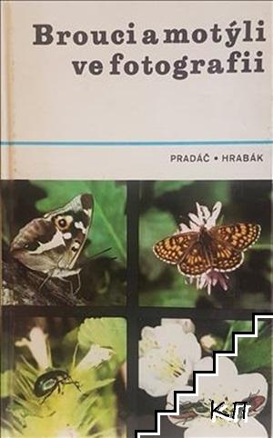 Brouci a motýli ve fotografii