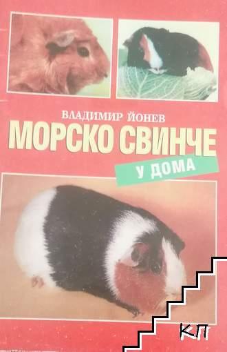 Морско свинче у дома